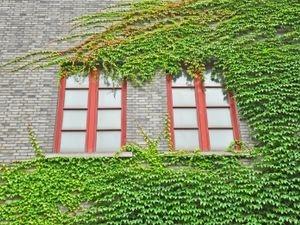 renovation-menuiserie-strasbourg