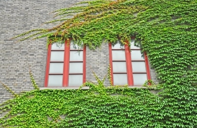 renovation menuiserie strasbourg